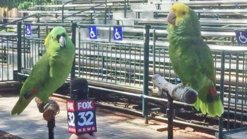 Two Birds Being Interviewed Suddenly Break Out Into Song | Country Music Videos