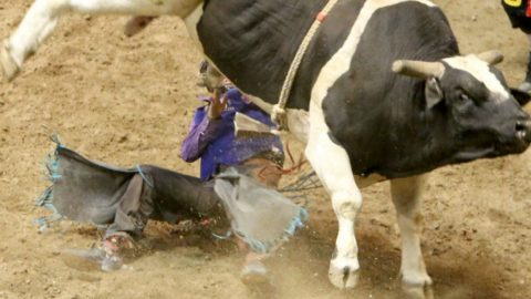 Bull Rider Miraculously Walks Out Of ICU After Being Crushed By Bull | Country Music Videos