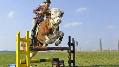 15-Year-Old Farm Girl Taught The Family Cow To Jump Like A Horse (You've Gotta See This!) | Country Music Videos