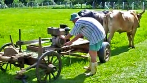 Two Cows, A Wagon & 2-Stroke Engine Make The CRAZIEST Redneck Invention You'll Ever See | Country Music Videos