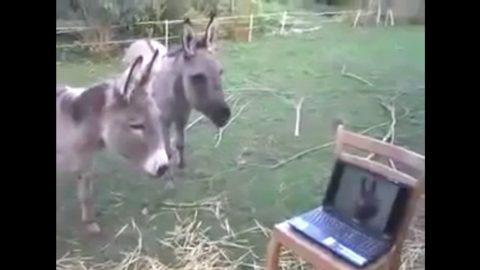 Donkey Friends Share Touching Reunion Via Skype | Country Music Videos