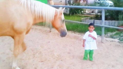 Horse Walks Up To Little Boy With Rare Disorder & Leaves His Mom Speechless | Country Music Videos