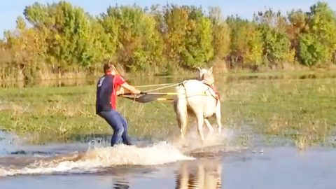 You Won't Believe What Happens When This Horse Is Given A Wakeboard | Country Music Videos