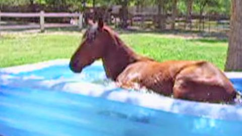 This Very Big Horse Hysterically Makes A Splash In Kiddie Pool | Country Music Videos