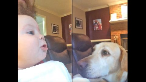 ADORABLE ALERT: 5 Month Old Baby Challenges Family Dogs To Howling Competition   Country Music Videos