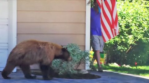 Bear and Man Scare Each Other And It's Hysterical! | Country Music Videos