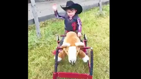 This Little Cowboy Tries To Climb Onto Toy Bull. What Happens Next? I Can't Stop Smiling!   Country Music Videos