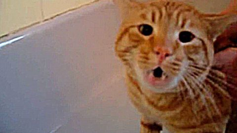 This Cat's Reaction To His First Bath Will Have You Laughing Out Loud (WATCH) | Country Music Videos