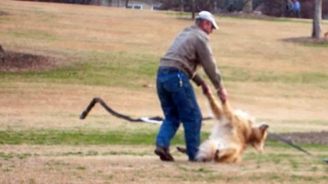 You'll Have A Laughing Fit Watching This Dog Refuse To Leave The Park | Country Music Videos