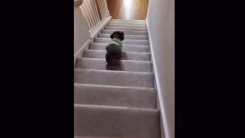 Tuba Sound Scares Dog, And It's Hilarious! (WATCH) | Country Music Videos