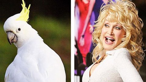 10+ Animals That Look Like Your Favorite Country Singers   Country Music Videos