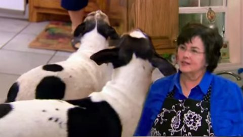 Robertsons Talk Dogs: Miss Kay Loves Them And Uncle Si Scares Them | Country Music Videos