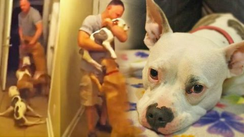 Adorable Disabled Dog Welcomes Home Airman After Deployment | Country Music Videos