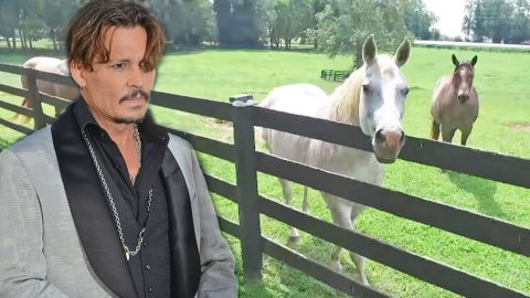 Johnny Depp's Horse Farm On Auction Block For Mind-Boggling Price | Country Music Videos