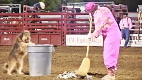 Rodeo Clown & Scruffy Dog's Hysterical Skit Will Have You Howlin' With Laughter   Country Music Videos
