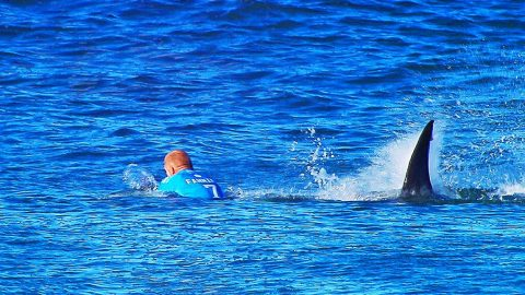 Surfer Survives Shark Attack On Live TV, And It's All Caught On Tape!! | Country Music Videos