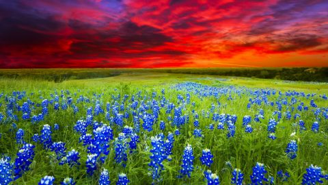 10 Reasons Why You'll Hate The Plants That Cover Texas Hill Country   Country Music Videos