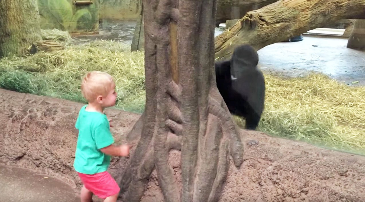 Baby Boy & Baby Gorilla Playing Peek-A-Boo Is The Cutest Thing Y'all Will See Today!