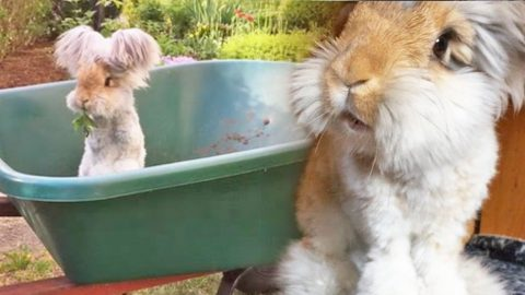 Prepare To Witness The Cutest Animal Of All Time (Must-See!) (WATCH) | Country Music Videos