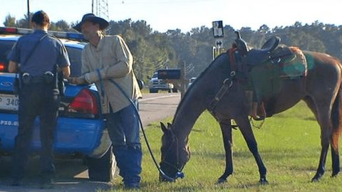 """Wasted Wrangler Cited On Stallion: """"The Horse Knows The Way Home"""" 