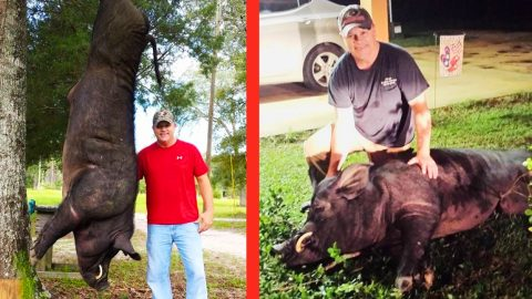 This 820-LB Wild Boar Crossed The Wrong Alabama Man | Country Music Videos