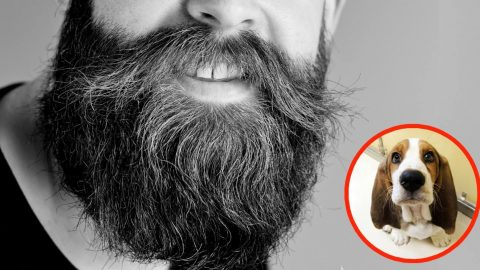 Study Shows: Men With Beards Carry More Germs Than Dogs | Country Music Videos