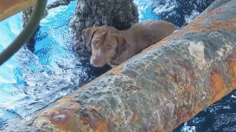 Dog Who Swims 100+ Miles Out To Sea Is Rescued By Oil Rig Workers | Country Music Videos