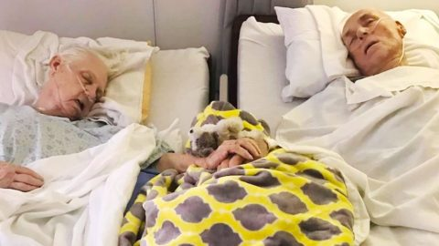 Couple Dies Together Holding Hands After 62 Years Of Marriage | Country Music Videos