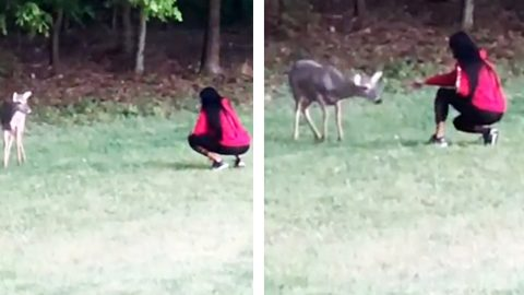 Video: Travis Tritt's Wife Has Reunion With Deer She Raised | Country Music Videos