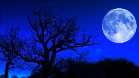 For The Last Time This Decade, A Blue Flower Moon Will Light Up The Sky | Country Music Videos