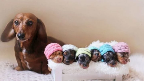Adorable Wiener Dog Photoshoot Has Hearts Melting – Photos Are Precious | Country Music Videos