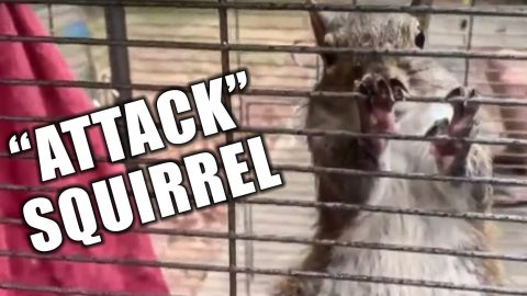 """Officers Find An """"Attack"""" Squirrel During Meth Raid 
