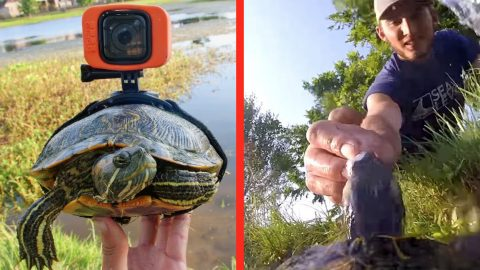 This Turtle's GoPro Footage Shows What Life In The Pond Is Really Like | Country Music Videos