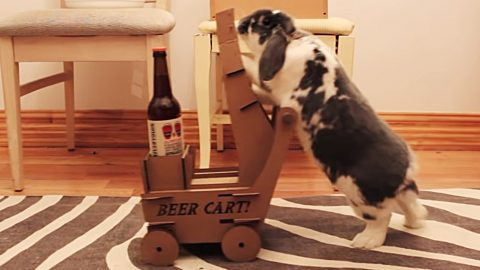 Pet Rabbit Does The Impossible & Fetches Owner A Beer | Country Music Videos