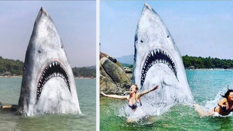 Graffiti Artist Turns Beach Rock Into Great White Shark Masterpiece | Country Music Videos