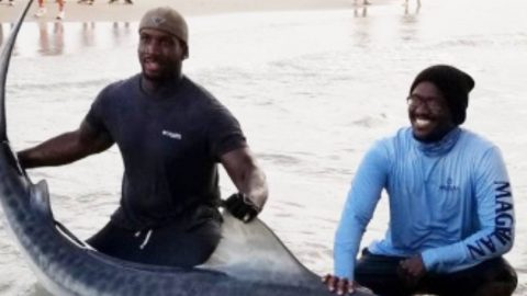 Texas Brothers Break Their Own Record With Massive Shark Catch | Country Music Videos