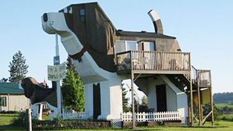 People Are Renting This Dog-Shaped Home For The Night | Country Music Videos
