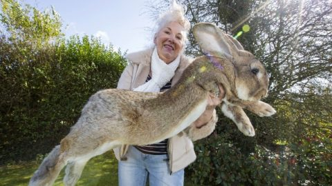 The Largest Rabbit On The Planet Weighs 49 LBS & Is Over 4 Feet Long | Country Music Videos