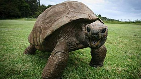 187-Year-Old Tortoise is the Oldest-Known Land Animal in the World | Country Music Videos