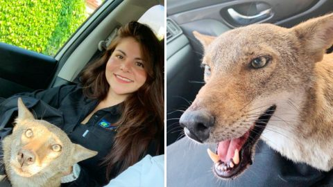 Woman In Mexico Finds Out The Dog She Rescued Is Actually A Coyote | Country Music Videos