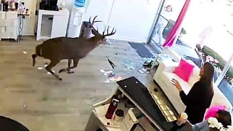 Buck Breaks Through Salon Window, Sends Woman To Hospital | Country Music Videos