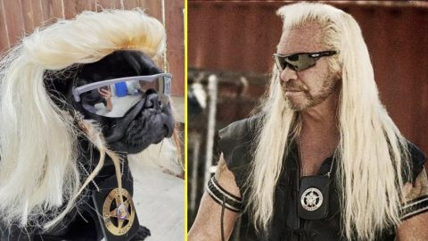 Pug Wears Blonde Wig For 'Dog The Bounty Hunter' Costume   Country Music Videos