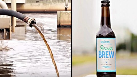 Beer Made From Toilet Water Brewed In Berlin | Country Music Videos