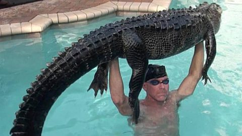 Man Jumps Into Pool With 9-Foot Alligator, Captures It Bare-Handed In Florida | Country Music Videos