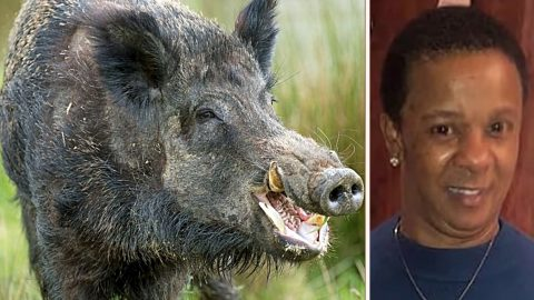 Wild Hogs Ambushed & Killed Texas Woman On Her Way To Night Shift | Country Music Videos