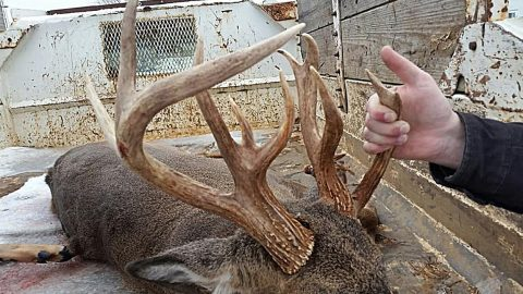 Hunter Shoots 13-Point Deer, Then Realizes It's Not A Buck, But A Doe   Country Music Videos
