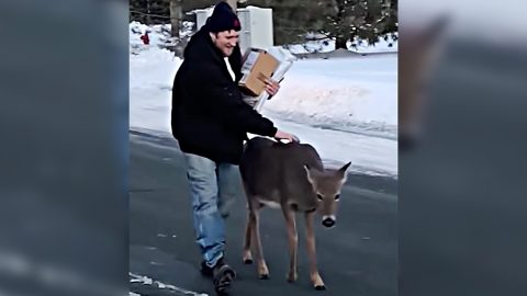 Deer Walks Up To Man & Nudges His Hand Hoping To Get Pet   Country Music Videos