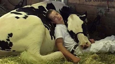 Kid And Cow Fall Asleep On Each Other After Iowa State Fair Competition | Country Music Videos