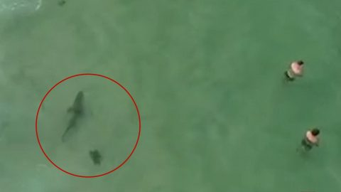 7-Foot Shark Stalks Swimmers – Drone Pilot Spots It & Lady Notifies Them | Country Music Videos