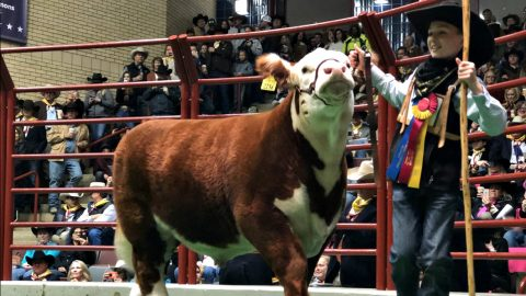 12-Year-Old's Grand Champion Steer Sells For Record-Breaking $300K | Country Music Videos